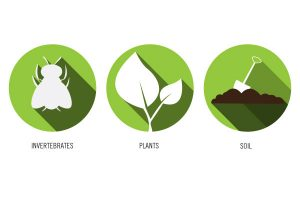 invertebrates plants soil icons